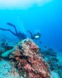 Group of divers going deep Stock Photos