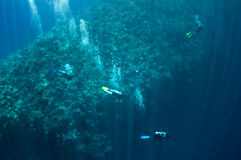 A group of divers is moving along the reef Stock Photography