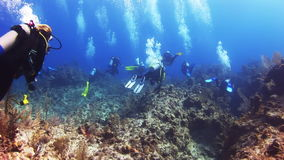 Group of divers swimming along the reef in Bahamas stock video footage