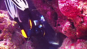 Group of divers swimming along the reef in Bahamas. Amazing, beautiful underwater world Bahamas and the life of its inhabitants, creatures and diving, travels stock video footage