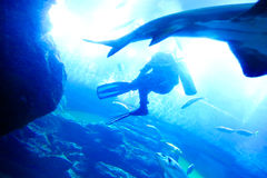 Group divers underwater Stock Images