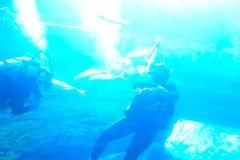 Group divers underwater Stock Photo