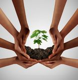 Group Of Diverse People Care. And responsibility idea as a cooperation through social diversity nurturing a sapling tree Royalty Free Stock Photo