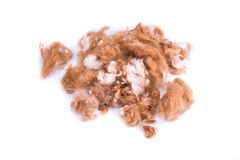 Group of dog fur trimmed during grooming in salon Royalty Free Stock Photo