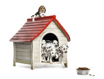 Group of dog puppies playing with a dog kennel, isolated. On white Royalty Free Stock Photo