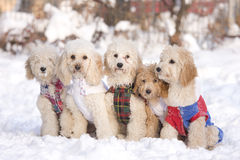 Group of dogs. In snow stock image
