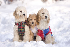 Group of dogs. In snow royalty free stock photography