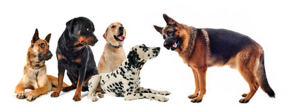 Group of dogs. Group of five dogs on a white background Stock Photo