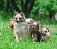 Group of dogs. royalty free stock photos