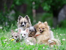 Group of dogs. royalty free stock image