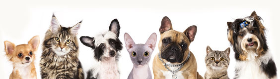 Group of dogs, animals. Cat and dog, medium group of animals Royalty Free Stock Photos