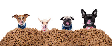 Group of dogs behind mound food. Big row or group of hungry dogs behind a big mound of food , ready to eat lunch , on white background royalty free stock photos