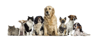 Group of Dogs and a cat Royalty Free Stock Image