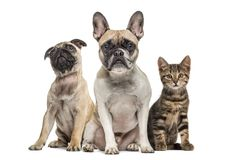 Group of dogs and cat sitting, isolated. On white stock images