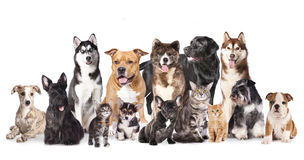 Group of dogs and cats. Cat and dog,Group of dogs and cats  sitting in front of a white background Royalty Free Stock Image