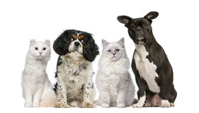 Group of dogs and cats. In front of a white background Stock Photography