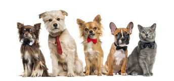 Group of dogs and cats royalty free stock photography