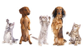 Group of dogs and cats Royalty Free Stock Images