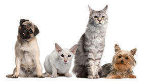 Group of dogs and cats sitting in front of white Stock Image