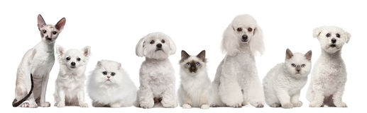 Group of dogs and cats sitting in front of white