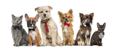 Group of dogs and cats sitting. In front of a white background royalty free stock images