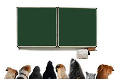 Group of dogs in a classroom of dog school
