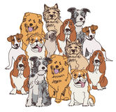 Group dogs color isolate on white Royalty Free Stock Images