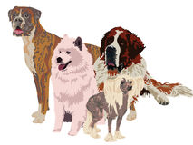 Group of dogs of different breeds Stock Image