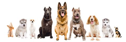 Group of dogs of different breeds sitting together stock image