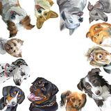 Group of dogs different breeds in square isolated on white backg. Group of dogs portraits different breeds Rottweiler, border collie; toy Terrier, Pembroke Welsh Stock Photo