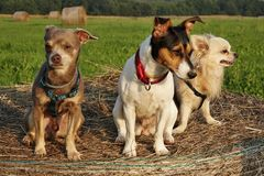 Group of dogs Royalty Free Stock Image