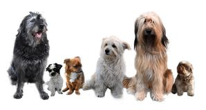 Group of dogs of different size