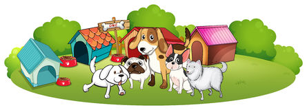 A group of dogs gathering in front of their house Royalty Free Stock Photo