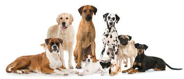 Group of dogs. Isolated on white stock images
