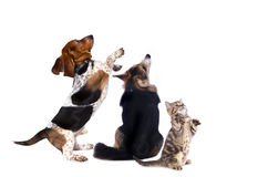Group of dogs and kitens royalty free stock photography