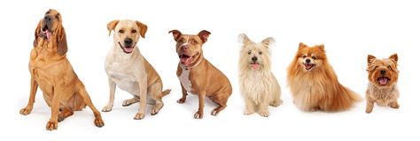 Group of Dogs From Large to Small royalty free stock photo