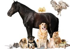 Group of animals on white background stock images