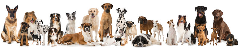 Group of dogs. Many breed dogs isolated on white background Stock Photos
