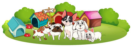 A group of dogs outside their houses Royalty Free Stock Images
