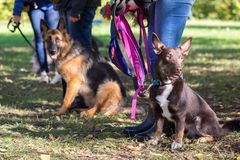 Dogs. Group of dogs with owners at obedience class royalty free stock photo
