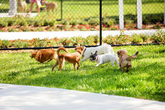 Group of dogs in the park royalty free stock photos