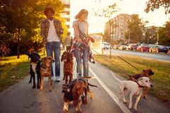 Group of dogs in the park walking with girl and man royalty free stock photo