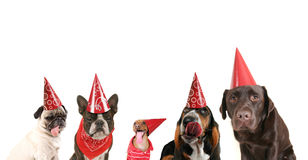 A group of dogs with party hats on Stock Photo