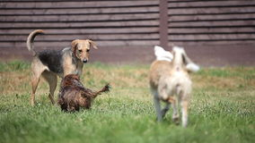 Group of Dogs Playing in the Backyard on a Sunny stock video