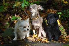 Group of dogs. And puppy posing on the camera stock photo