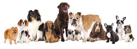 Group of dogs. Sitting in front of a white background stock image