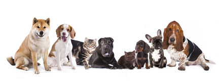 Group of dogs. Sitting in front of a white background Stock Photos