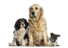 Group of dogs sitting together Stock Photo