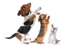 Group of dogs. Standing on hind legs stock images