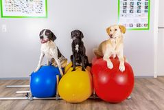 Group of dogs in vets office. Waiting for treatment Stock Photo